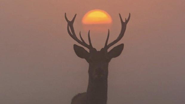bucks suns